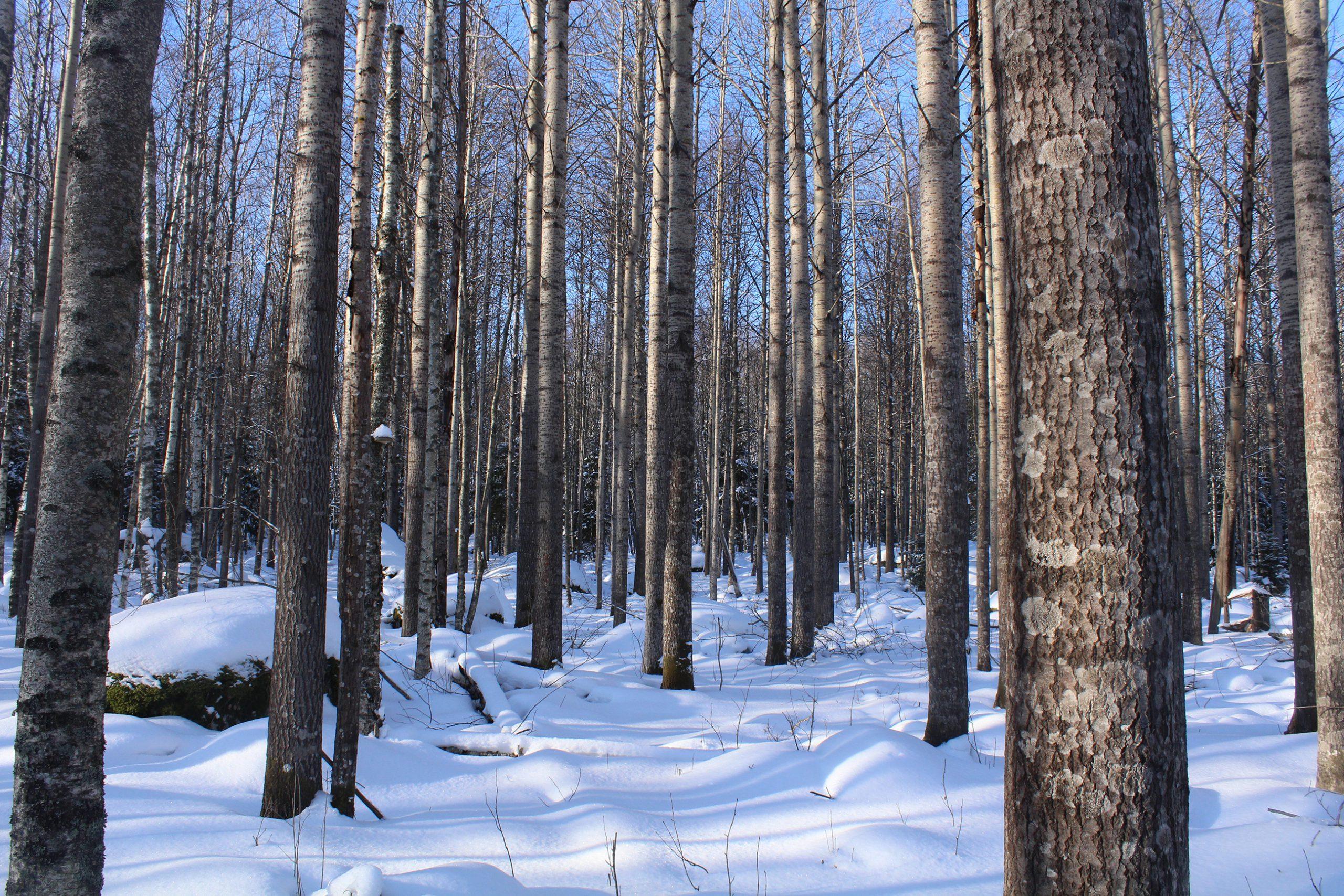 Retkeily suojelluissa metsissä on sallittu.