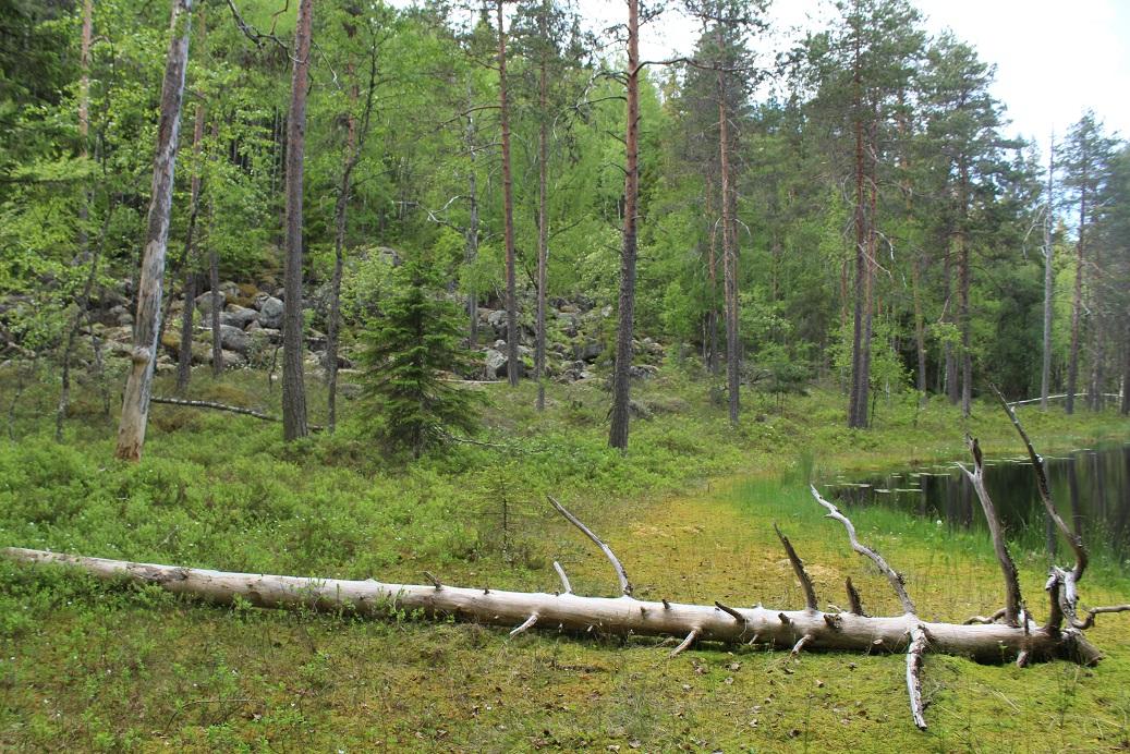PLUPS osti heinäkuussa 2021 yhdessä Luonnonperintösäätiön kanssa Pentti Linkolan muistometsän, Riuttasalon, Toivakasta läheltä Päijännettä.